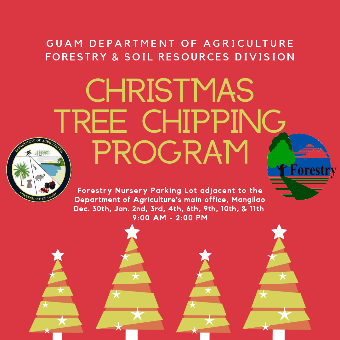 Department Of Agriculture Christmas Tree Chipping Program Begins Pnc News First